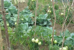 Vegetable garden at Mt. Peace Basic School